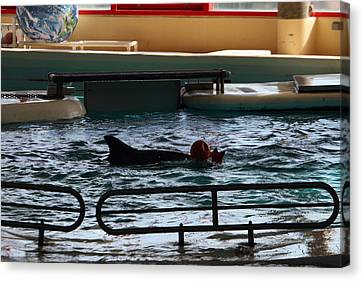 Dolphin Show - National Aquarium In Baltimore Md - 1212111 Canvas Print by DC Photographer