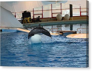 Dolphin Show - National Aquarium In Baltimore Md - 1212171 Canvas Print by DC Photographer