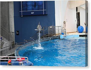 Dolphin Show - National Aquarium In Baltimore Md - 1212200 Canvas Print by DC Photographer
