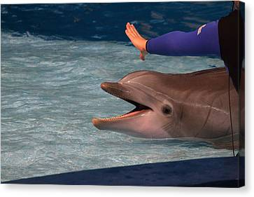 Dolphin Show - National Aquarium In Baltimore Md - 1212220 Canvas Print by DC Photographer