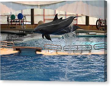 Dolphin Show - National Aquarium In Baltimore Md - 1212250 Canvas Print by DC Photographer