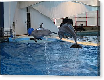 Dolphin Show - National Aquarium In Baltimore Md - 1212258 Canvas Print by DC Photographer