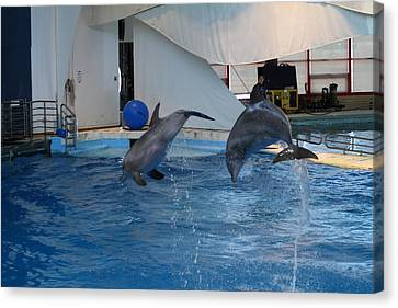 Dolphin Show - National Aquarium In Baltimore Md - 1212259 Canvas Print by DC Photographer