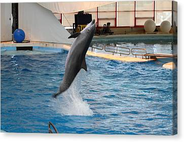 Dolphin Show - National Aquarium In Baltimore Md - 1212263 Canvas Print by DC Photographer