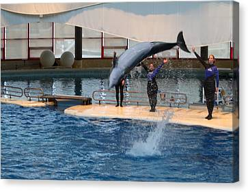 Dolphin Show - National Aquarium In Baltimore Md - 1212272 Canvas Print by DC Photographer