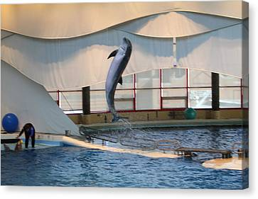 Dolphin Show - National Aquarium In Baltimore Md - 121254 Canvas Print by DC Photographer
