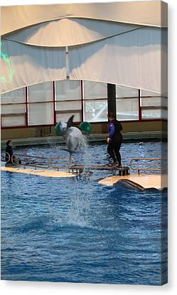 Dolphin Show - National Aquarium In Baltimore Md - 121267 Canvas Print by DC Photographer