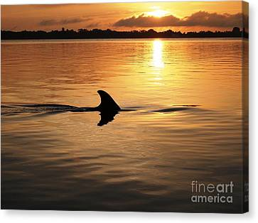 Dolphin Sunrise Canvas Print by Fred Benavidez