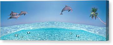 Dolphins Leaping In Air Canvas Print by Panoramic Images
