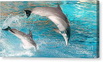 Dolphins Show Canvas Print by Michal Bednarek