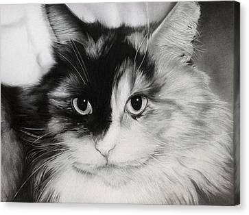 Domestic Cat Canvas Print by Natasha Denger
