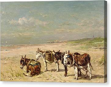Donkeys On The Beach Canvas Print by Johannes Hubertus Leonardus de Haas