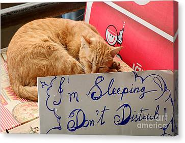 Dont Disturb - Sleeping Cat Canvas Print by Dean Harte