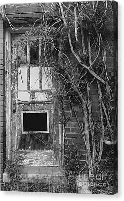 Door With Vines Canvas Print by Michelle OConnor