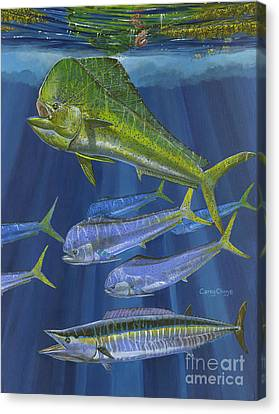 Dorado Rip Off0057 Canvas Print by Carey Chen