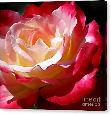 Double Delight Rose Canvas Print by Kaye Menner
