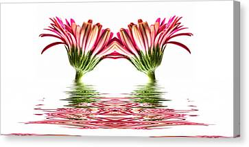 Double Pink Gerbera Flood Canvas Print by Steve Purnell