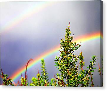 Double Rainbow Sky Canvas Print by Destiny  Storm