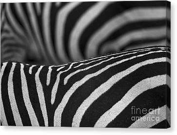 Double Vision... Canvas Print by Nina Stavlund