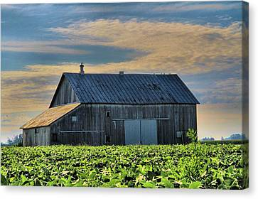 Down On The Farm Canvas Print by Dan Sproul