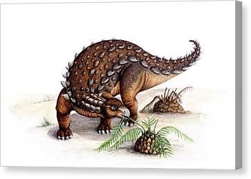 Dracopelta Dinosaur Canvas Print by Deagostini/uig