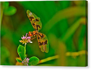 Dragonfly And Flower Canvas Print by Lorri Crossno