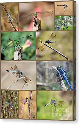 Dragonfly Collage 3 Canvas Print by Carol Groenen