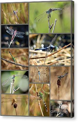 Dragonfly Collage Canvas Print by Carol Groenen
