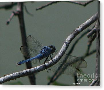 Dragonfly Canvas Print by Greg Patzer