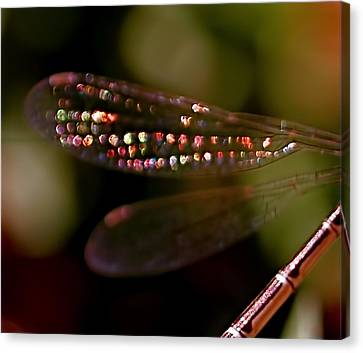 Dragonfly Jewels Canvas Print by Rona Black