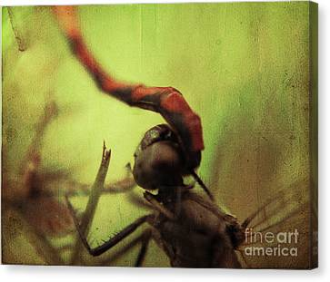 Dragonfly World Canvas Print by Aimelle