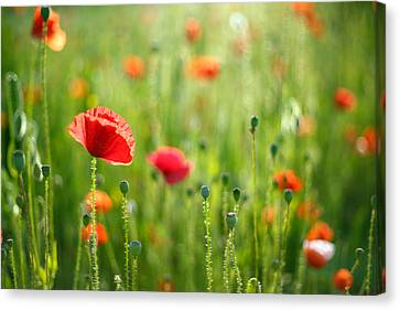 Dreamscape - Field Of Poppies Canvas Print by Roeselien Raimond