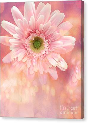 Dreamy Cottage Shabby Chic Pink Yellow Mango Gerber Daisy Flowers  Canvas Print by Kathy Fornal