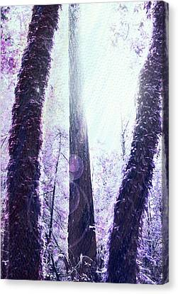 Dreamy Forest Canvas Print by Nicole Swanger