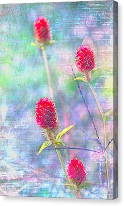 Dreamy Red Spiky Flowers Canvas Print by Karen Stephenson