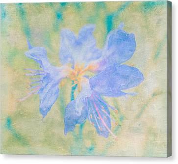 Dreamy Rhododendron Bloom Art Canvas Print by Priya Ghose