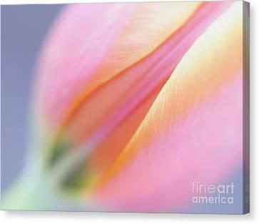 Dreamy Tulip Canvas Print by Irina Wardas