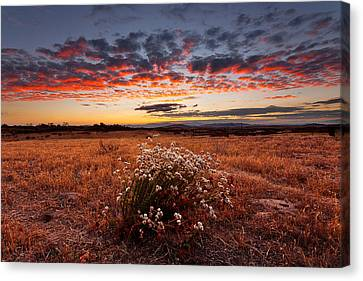 Dried Flowers Canvas Print by Peter Tellone