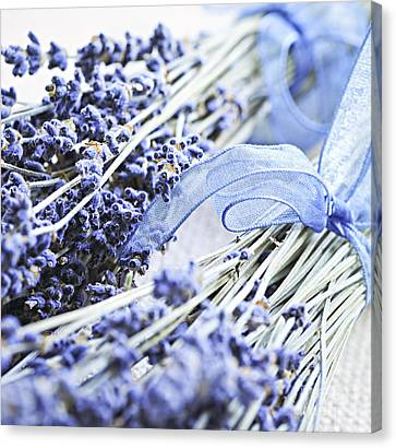 Dried Lavender Canvas Print by Elena Elisseeva