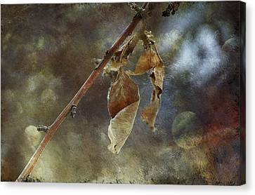 Dried Leaves Canvas Print by Maria Angelica Maira