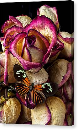 Dried Rose And Butterfly Canvas Print by Garry Gay