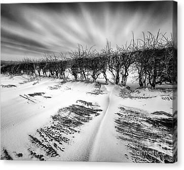 Drifting Snow Canvas Print by John Farnan