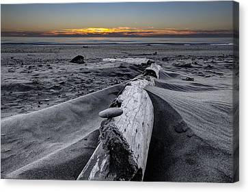 Driftwood In The Sand Canvas Print by Debra and Dave Vanderlaan