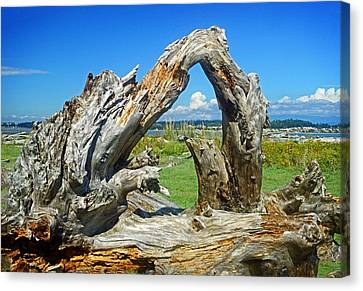Driftwood On  Iverson Beach Camano Island Wa Canvas Print by Maralei Keith Nelson