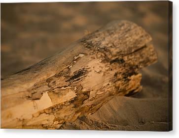 Driftwood Canvas Print by Sebastian Musial