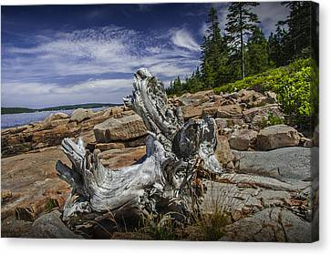 Driftwood Stump On The Shoreline In Acadia National Park Canvas Print by Randall Nyhof