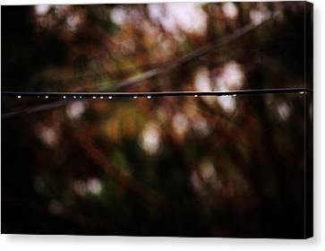Drops Canvas Print by Jessica Shelton