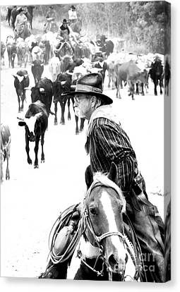 Drover At Work Canvas Print by Fred Lassmann