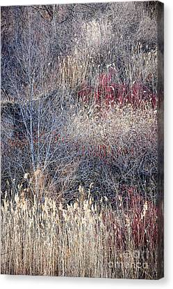 Dry Grasses And Bare Trees Canvas Print by Elena Elisseeva