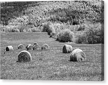 Dry Hay Bales In Maine Farm Field Canvas Print by Keith Webber Jr